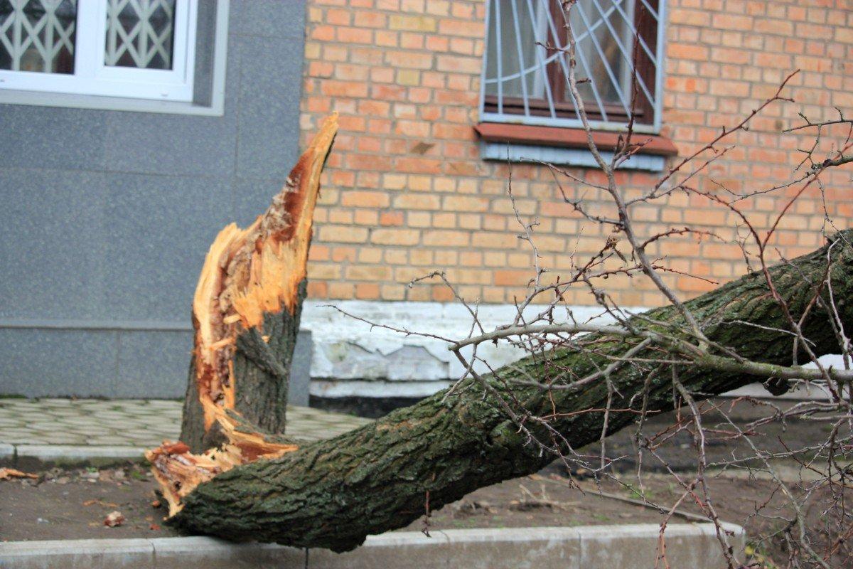 Ухудшение погодных условий в Никополе создало аварийную ситуацию