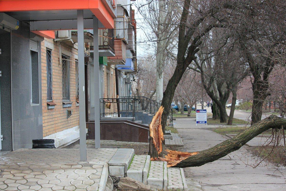 Ветер повалил дерево по ул. Мозолевского