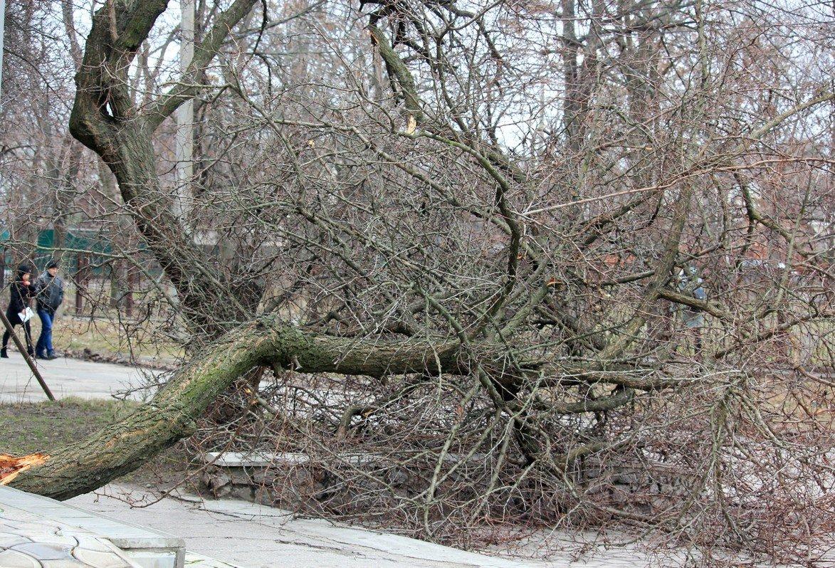 Дерево преграждает путь прохожим