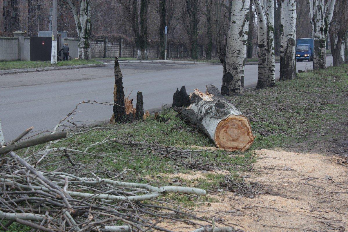 Ствол дерева на улице Героев Чернобыля