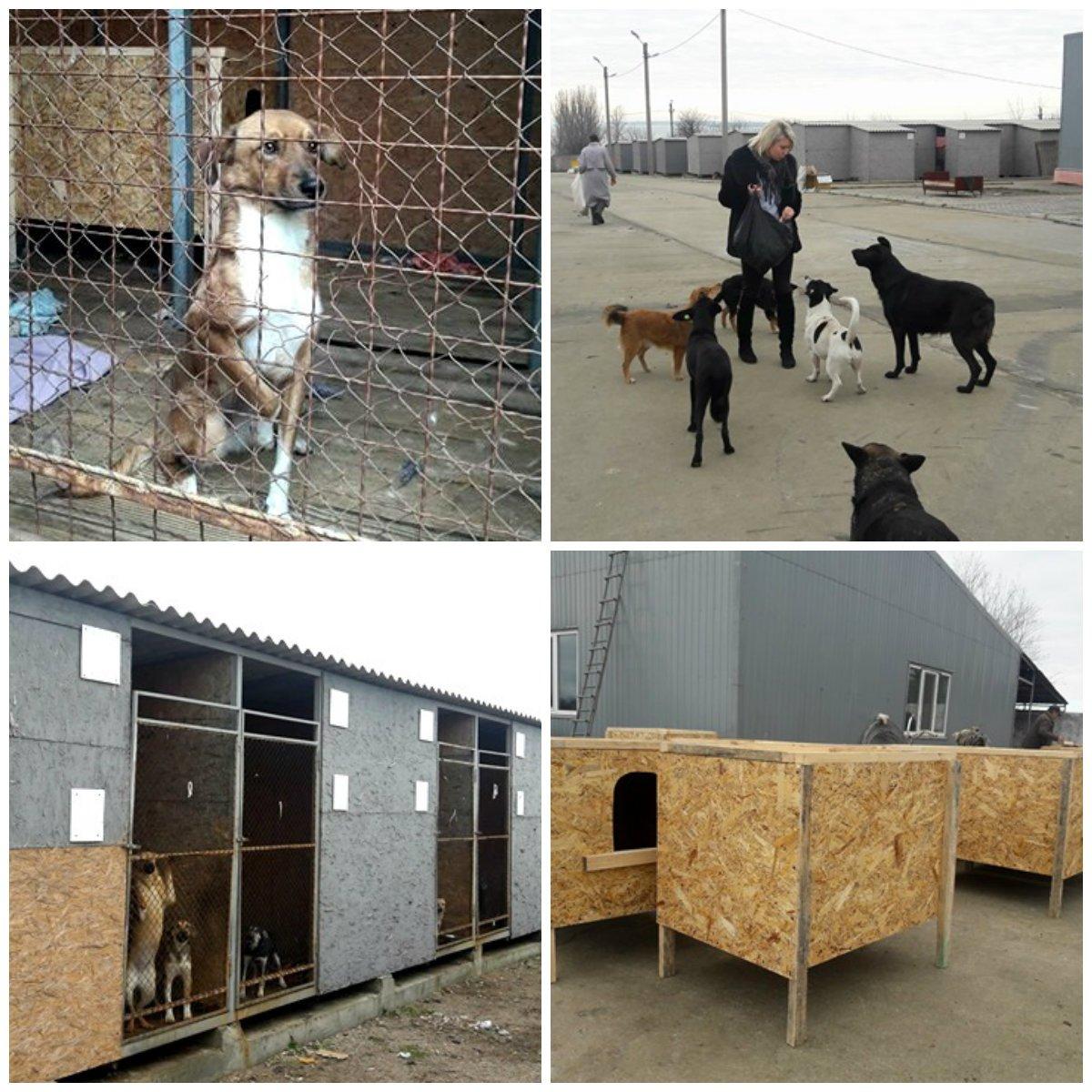 """В Никопольском приюте для животных """"Шанс на жизнь""""около 200 собак"""