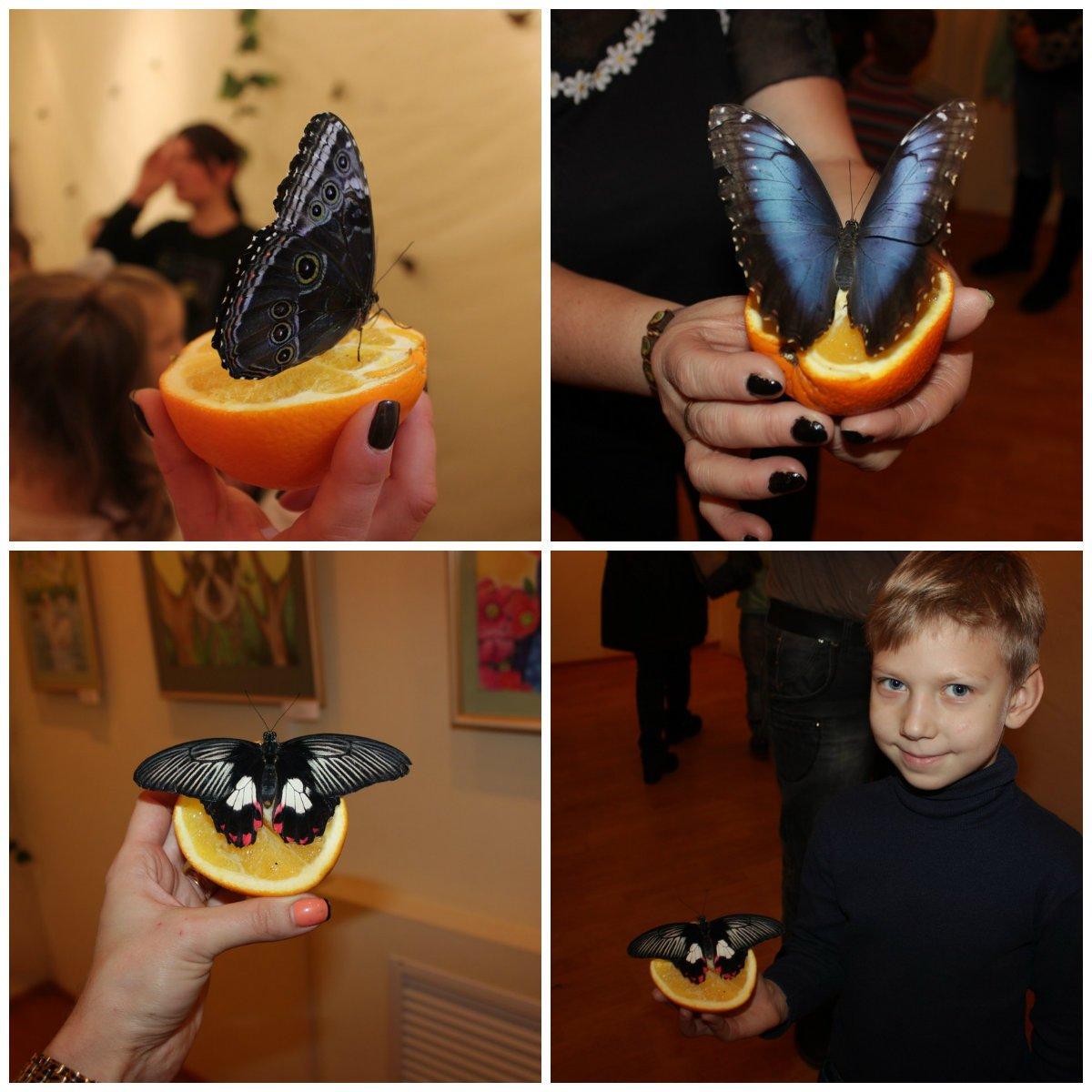 Такие разные - прекрасные бабочки