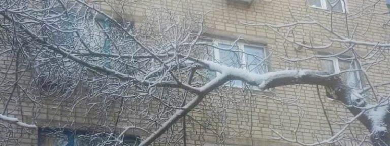 Опасные деревья: кто отвечает за обрезку сухостоя в Никополе