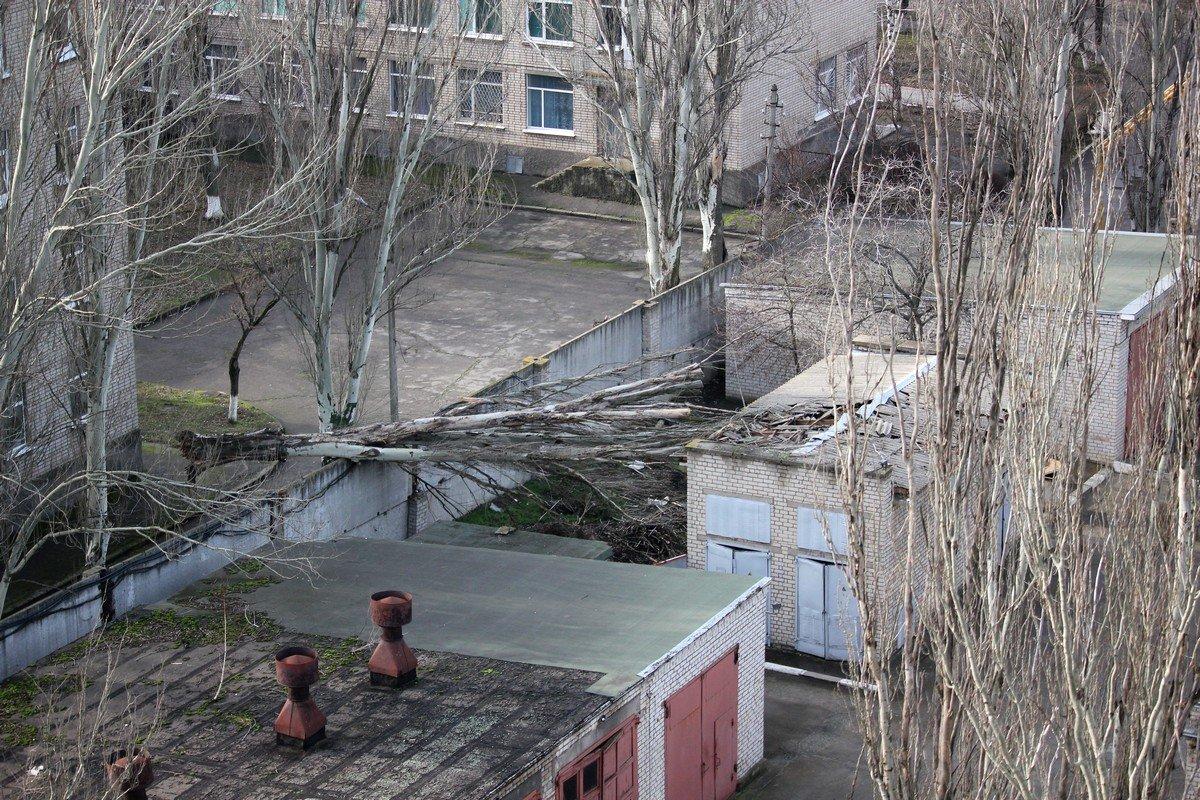 Вид на упавшее дерево с 10 этажа
