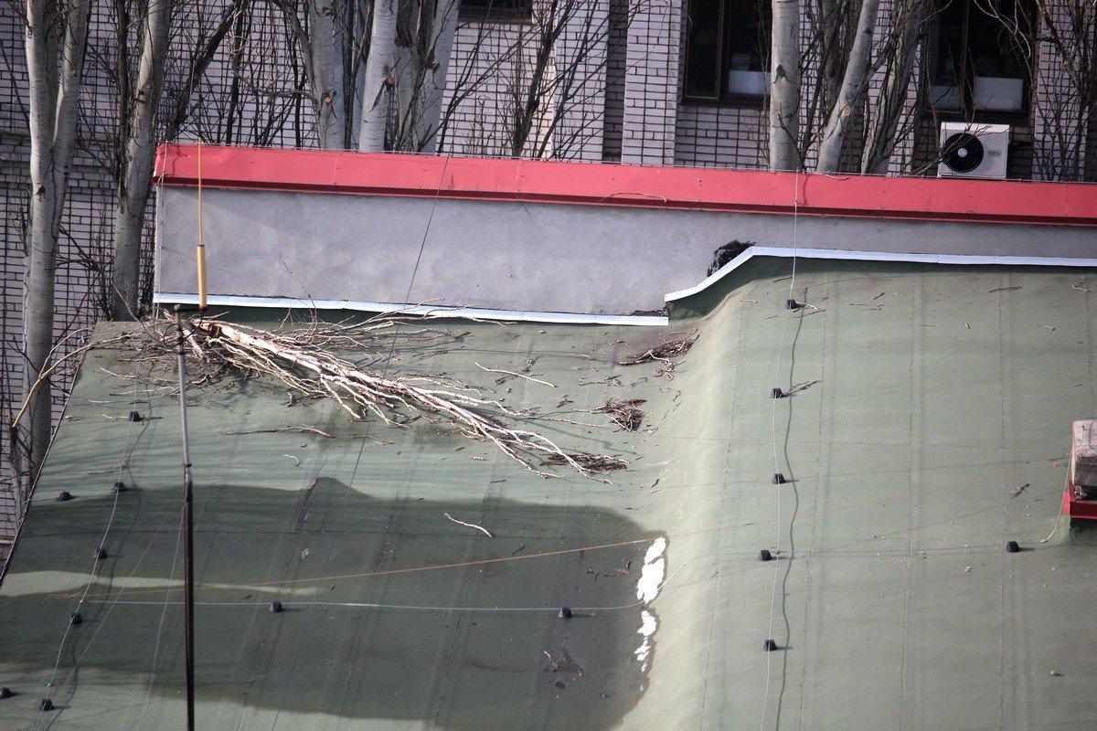 Обломанные веток на крыше здания
