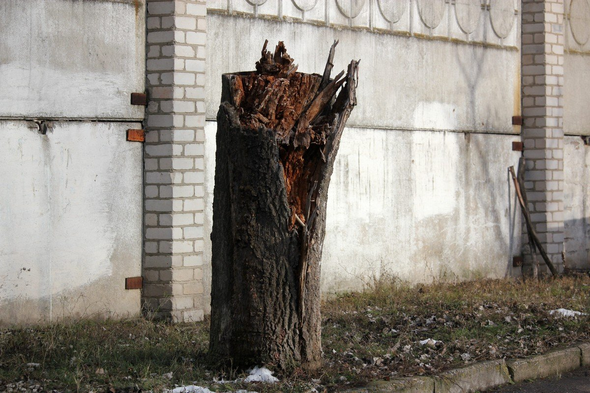 Еще одно сломанное дерево