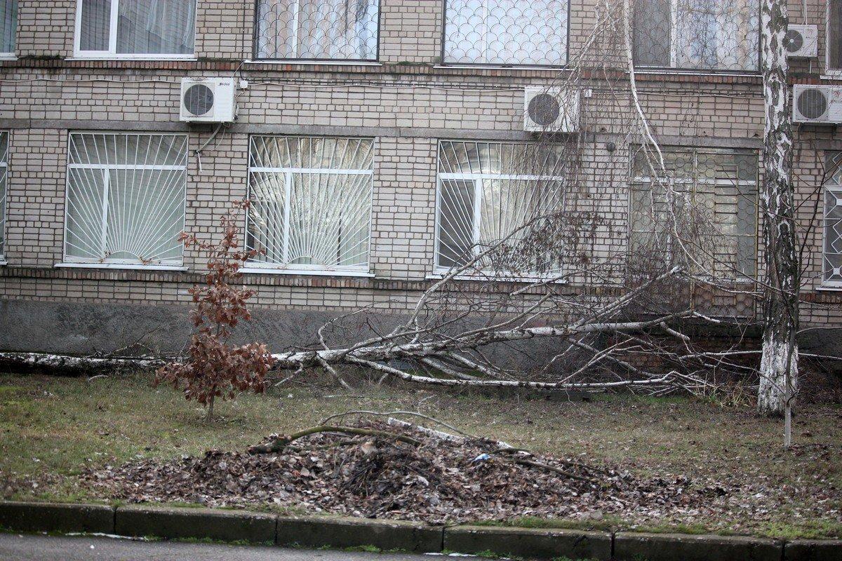 Упавшая береза чудом не побила окна
