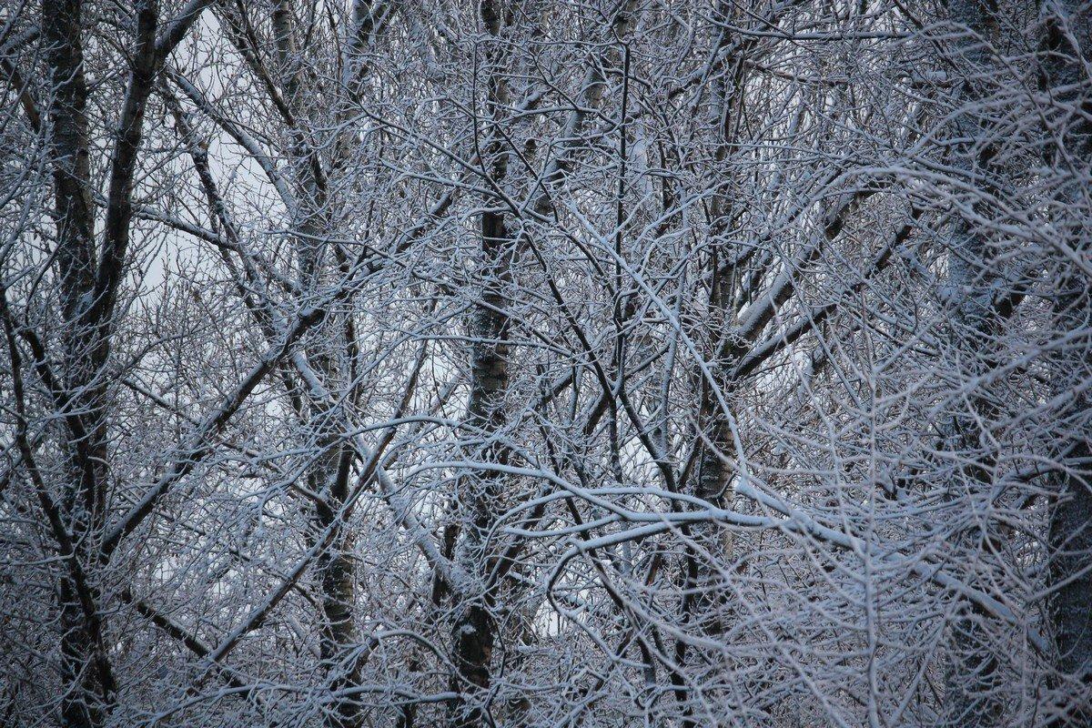 Обмерзшие ветки деревьев