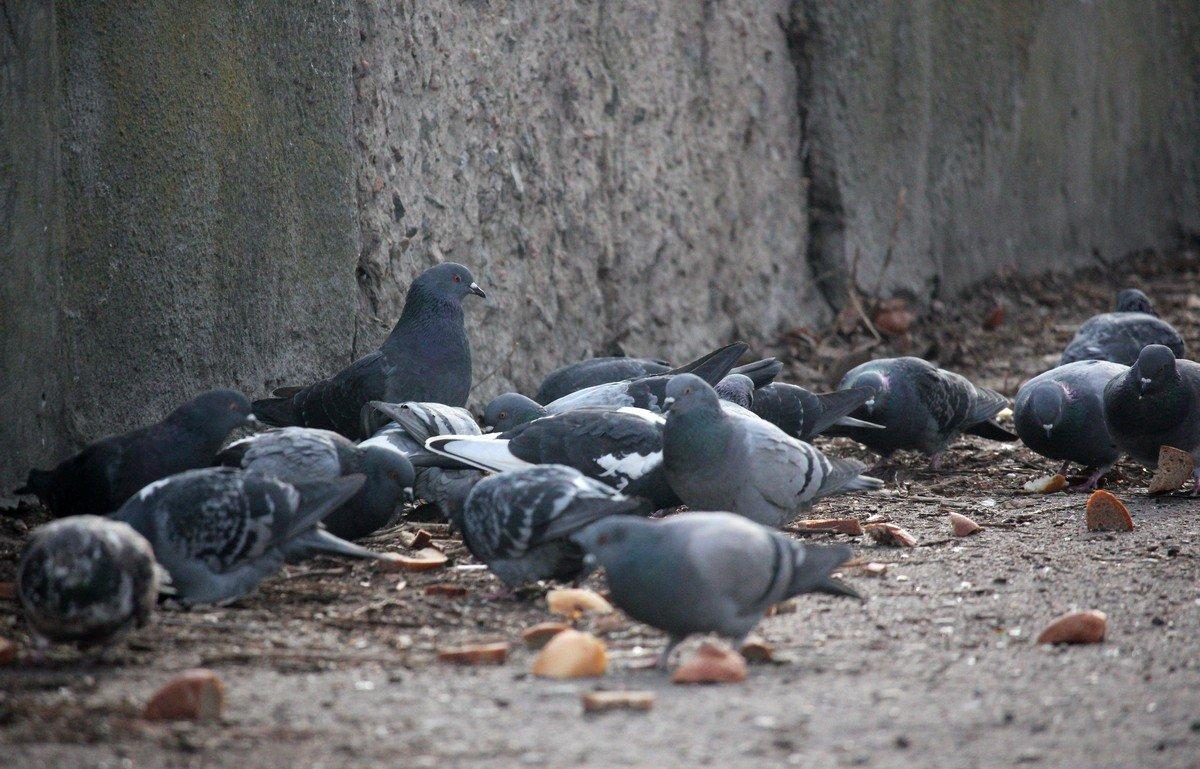 Зима - испытание для птиц