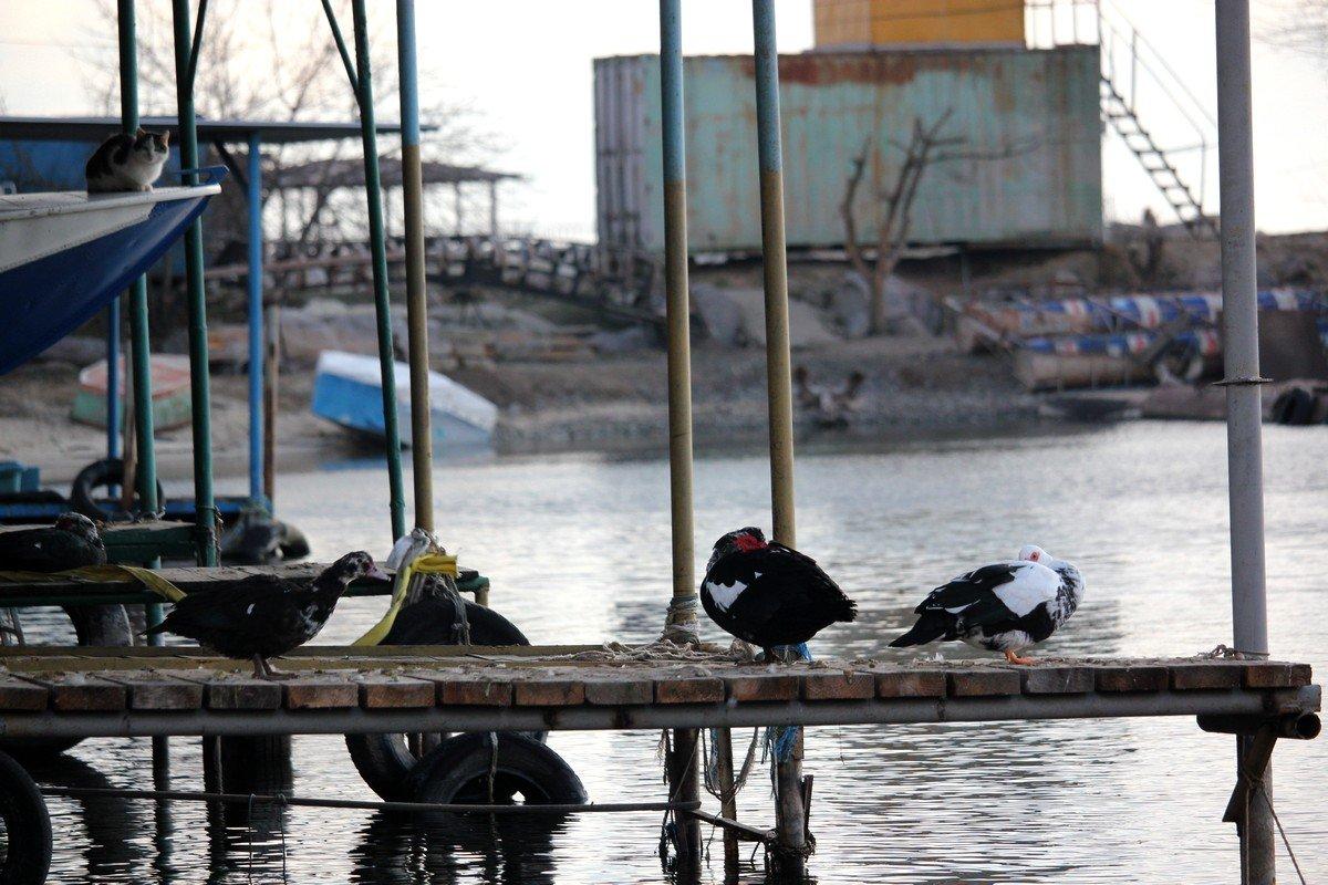 Утки на спасательной станции