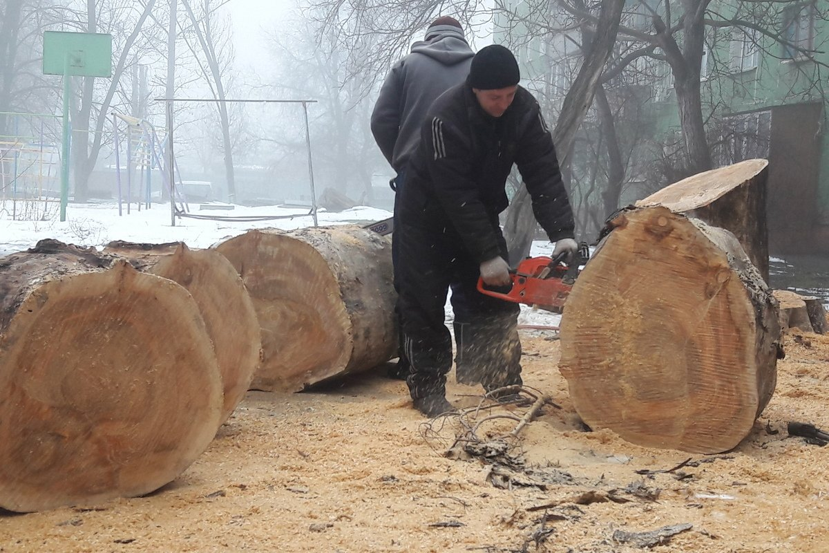 Убрали аварийное дерево