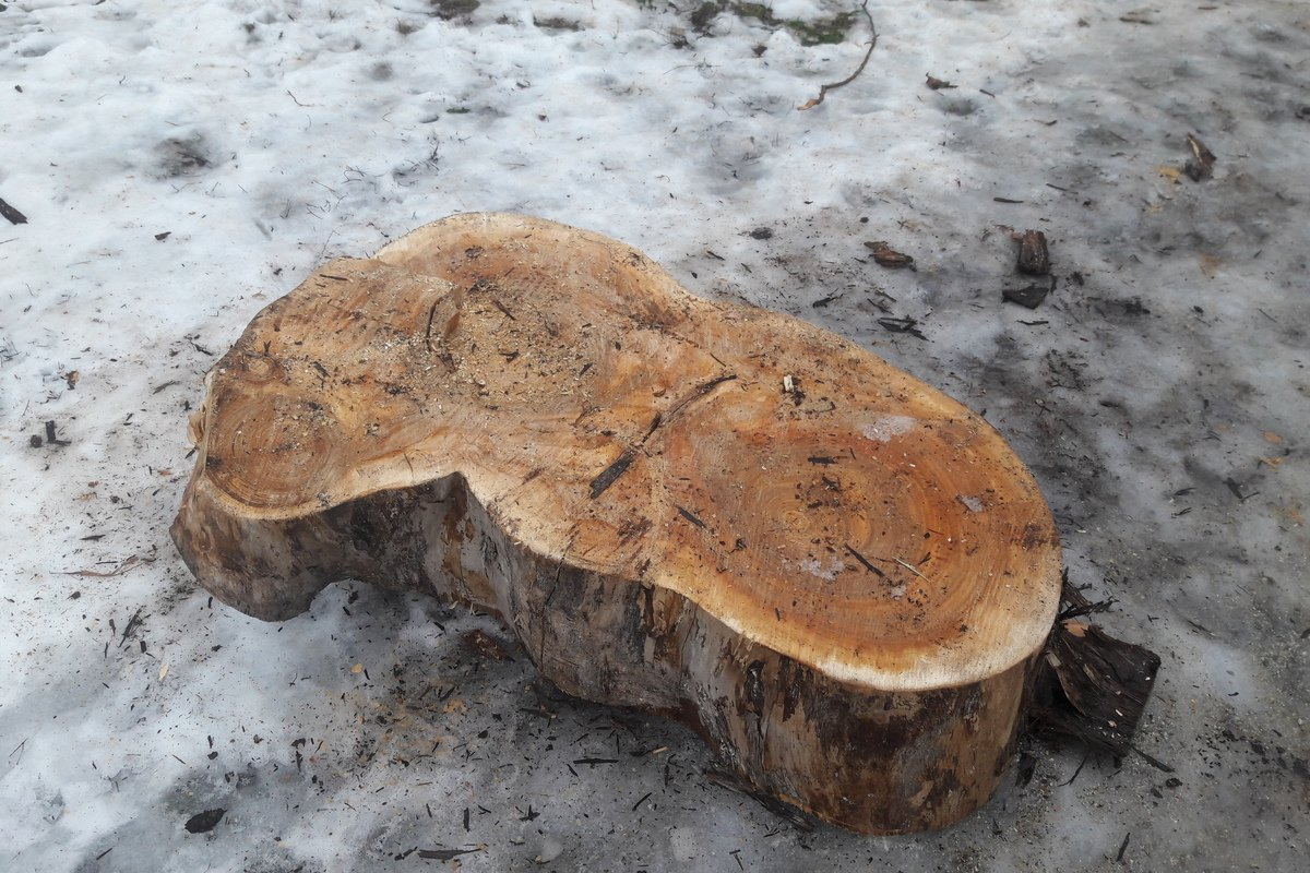 Многолетнее дерево