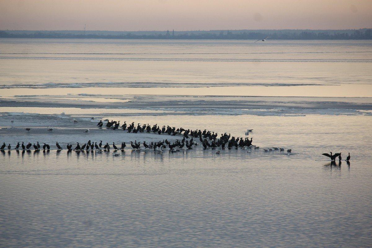 Большая стая птиц на водохранилище