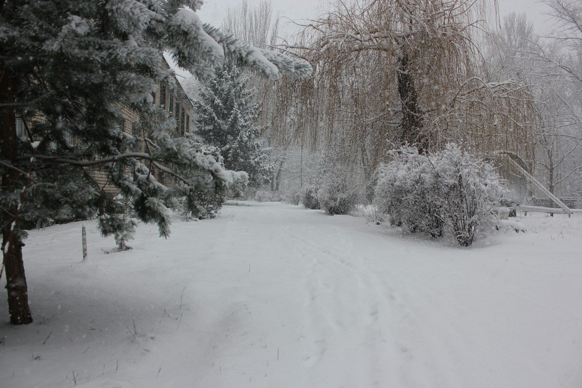 Тихо падает снег