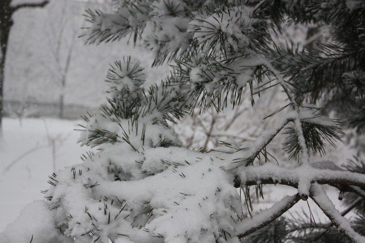И снова радуемся белому снегу