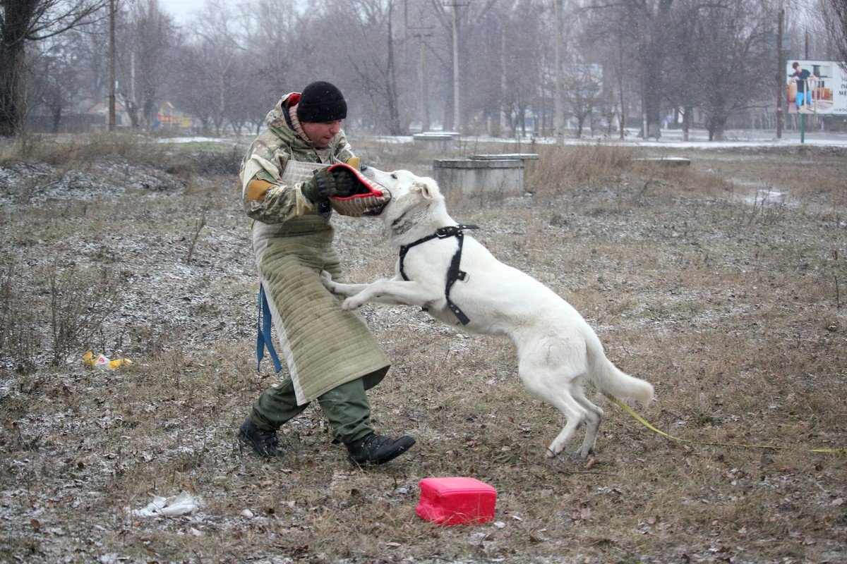 Босса обучают навыкам охранника