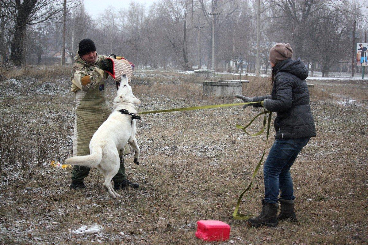 Сергей учит собак защищать хозяина, дом или семью