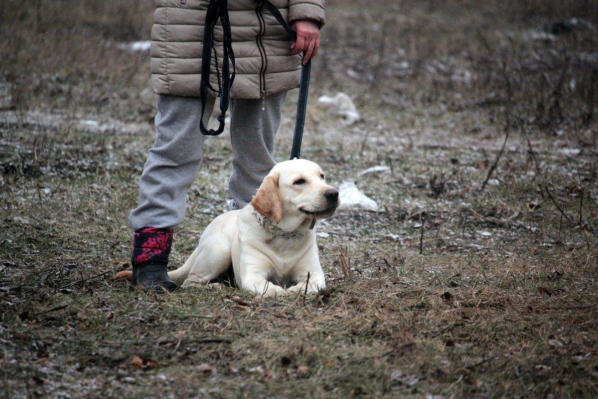 Дрессировке поддается любая порода собак, даже дворняжки