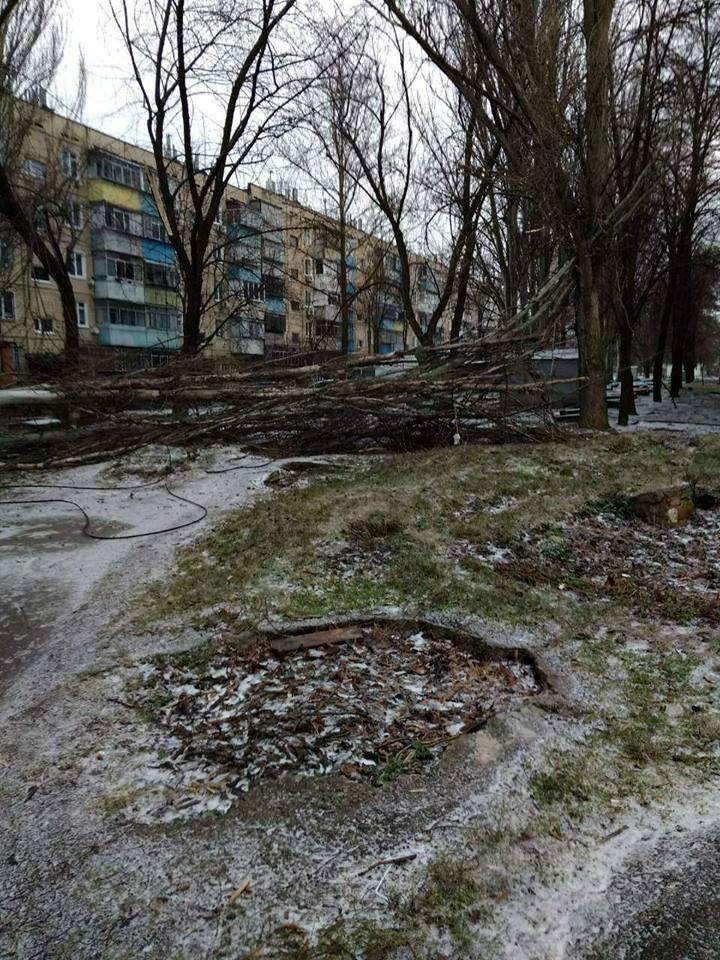 В Никополе ветер повалил деревья