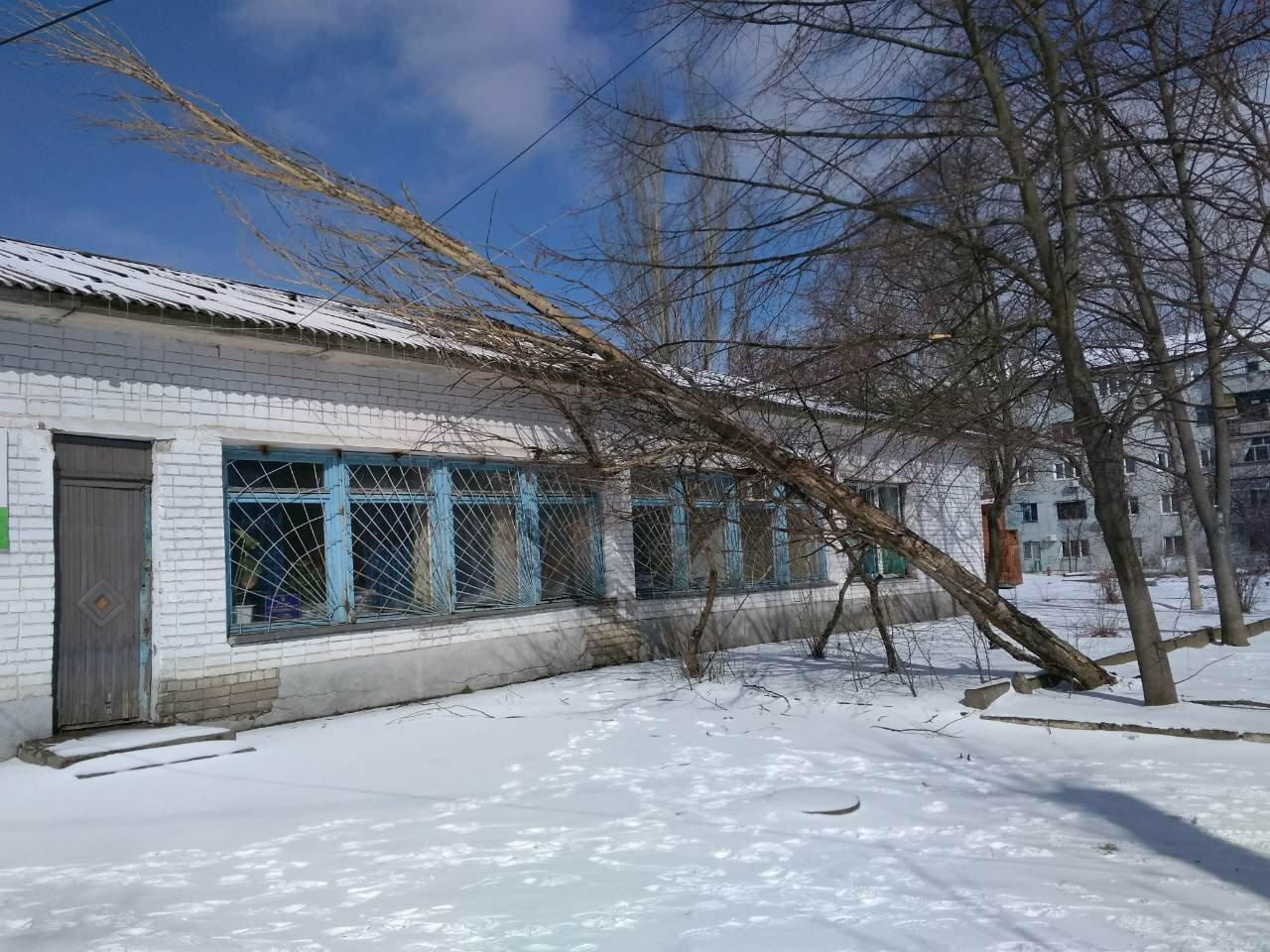 Дерево упало на здание Госгеокадастра