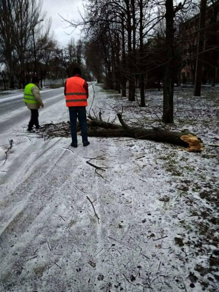 Порывистый ветер стал причиной падения деревьев
