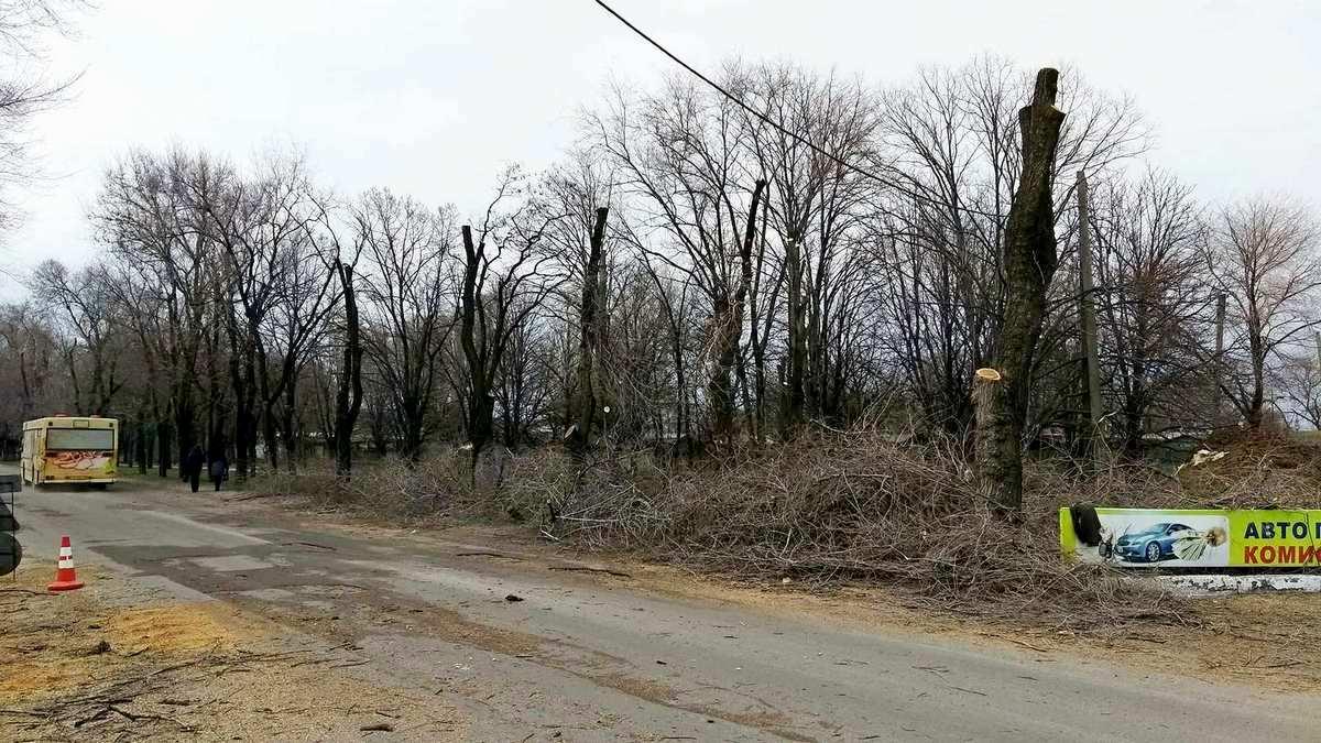 После обрезки деревья похожи на телеграфные столбы