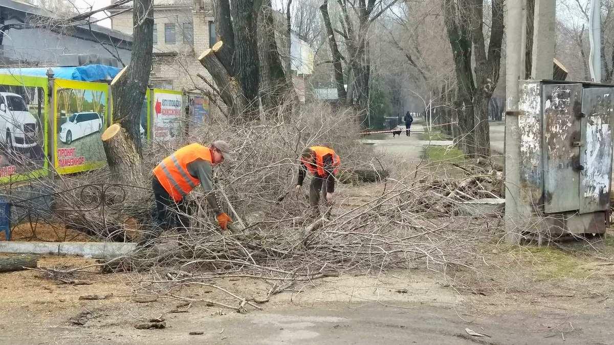 Коммунальщики собирают уже обрезанные ветки деревьев