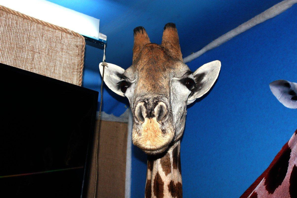 Чучело жирафа