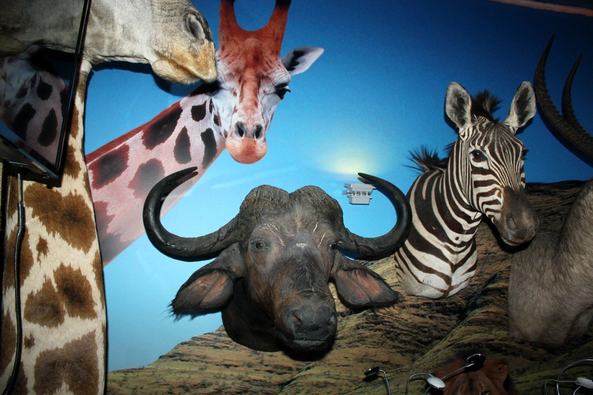 В музее можно увидеть представителей фауны, о которых нам известно лишь из книг