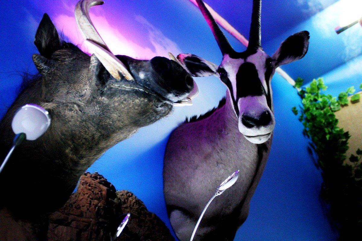 Чучела животных мирно соседствуют друг с другом