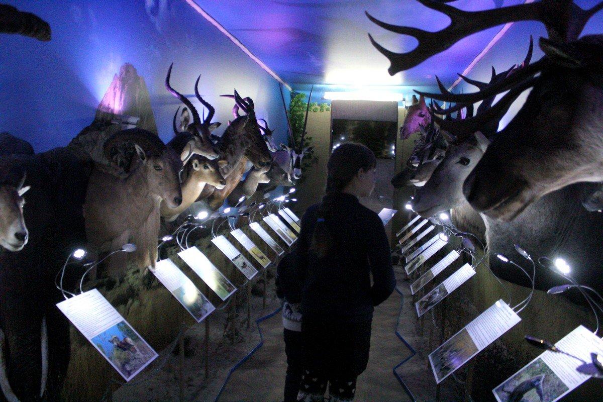 Юные посетители с интересом рассматривают экспонаты