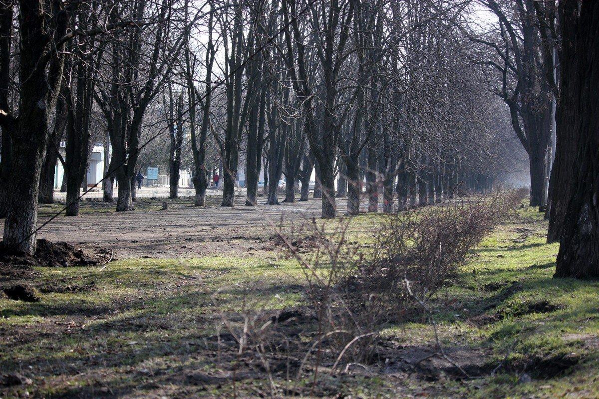 На аллее в районе Соцгорода вместо забора появились кусты