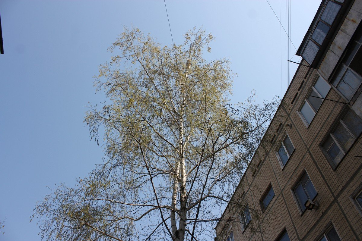 Хвостик не смог самостоятельно спуститься с дерева
