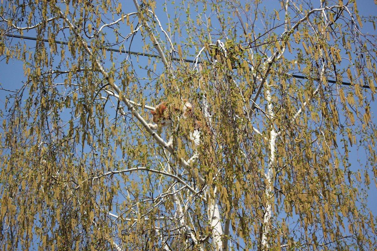 Кот громко мяукал на дереве и звал на помощь