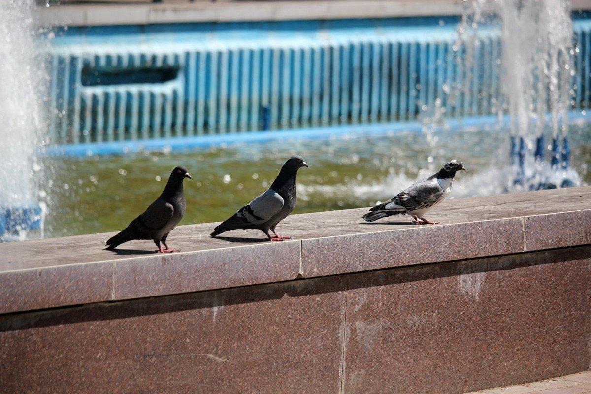 Место для птиц