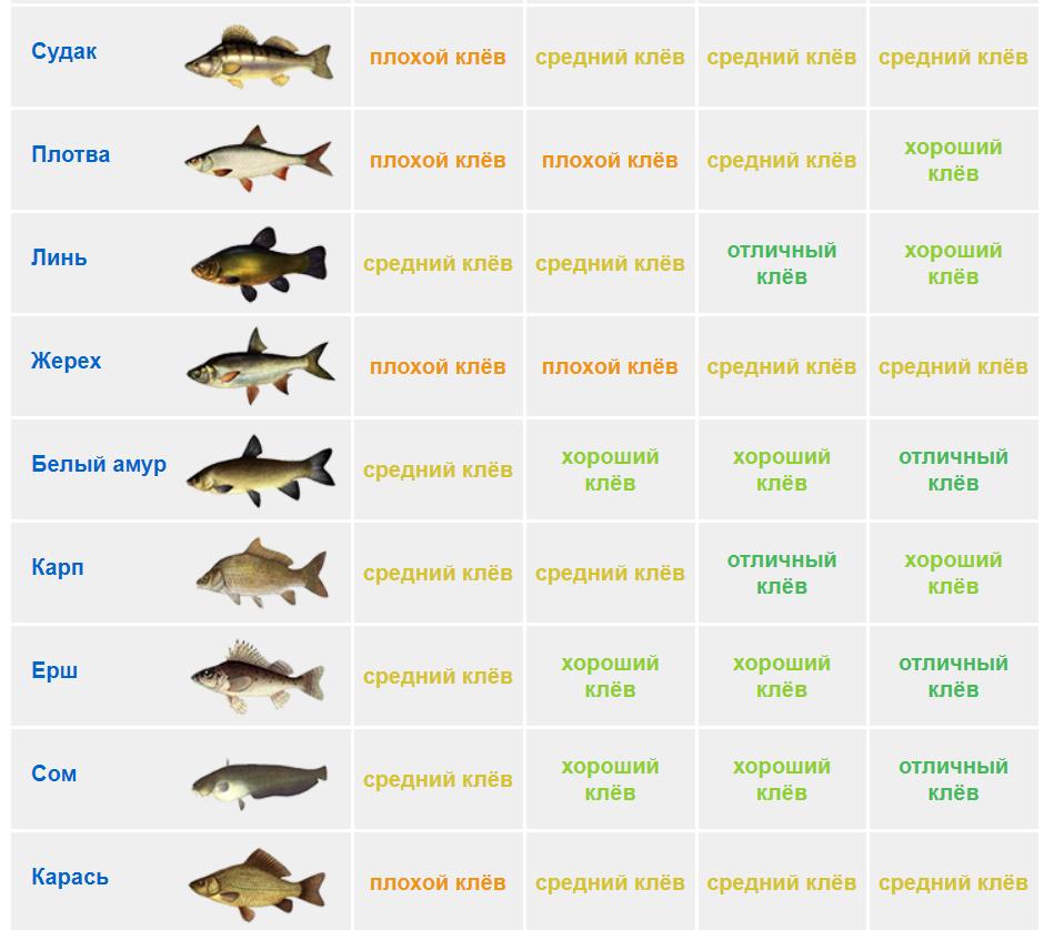 Например, самым популярным является двуреченское водохранилище, богатое популяциями щук и судака.
