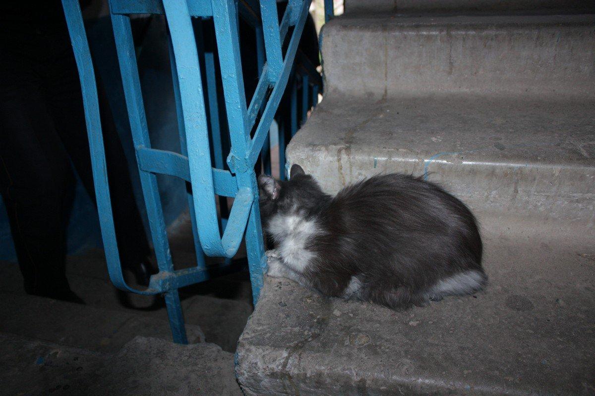 Кошка-погорелец