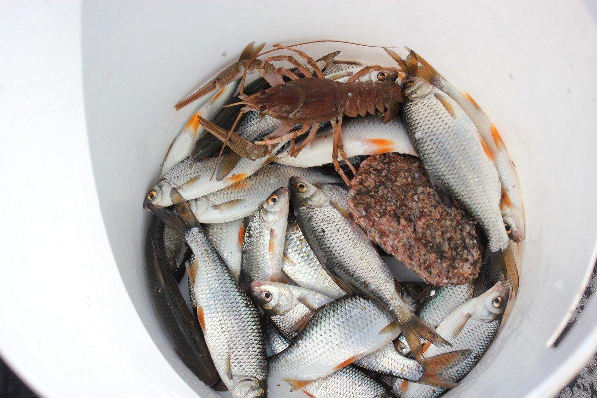 Улов одного из рыбаков
