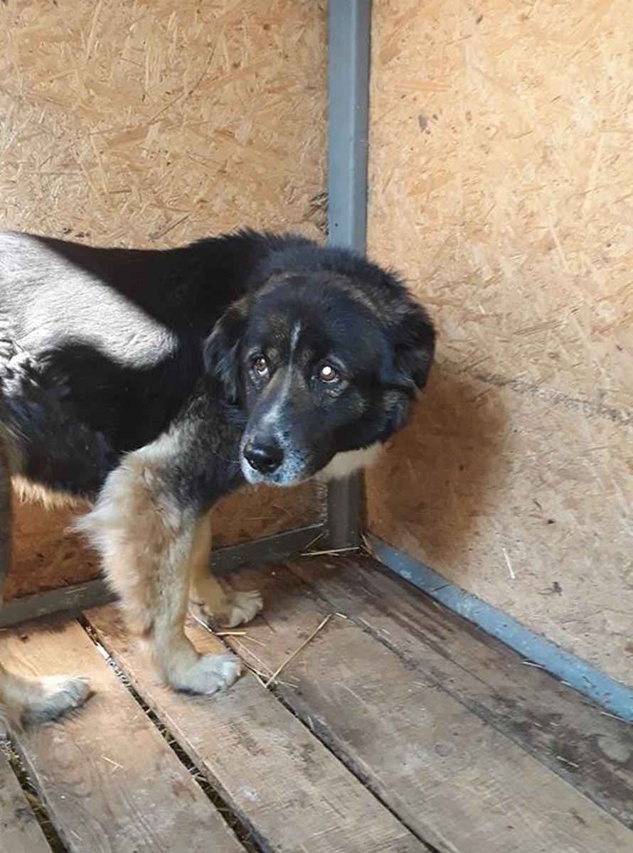 Собаку временно поместили в приют для животных
