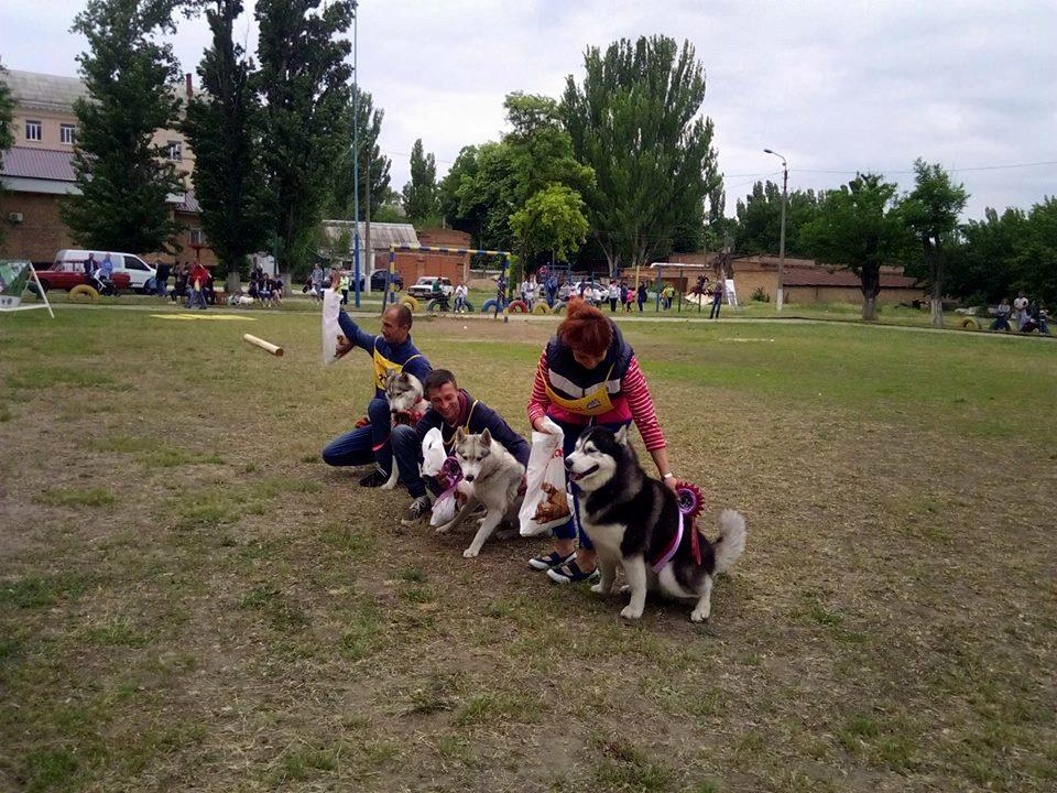 Награждение собак породы хаски