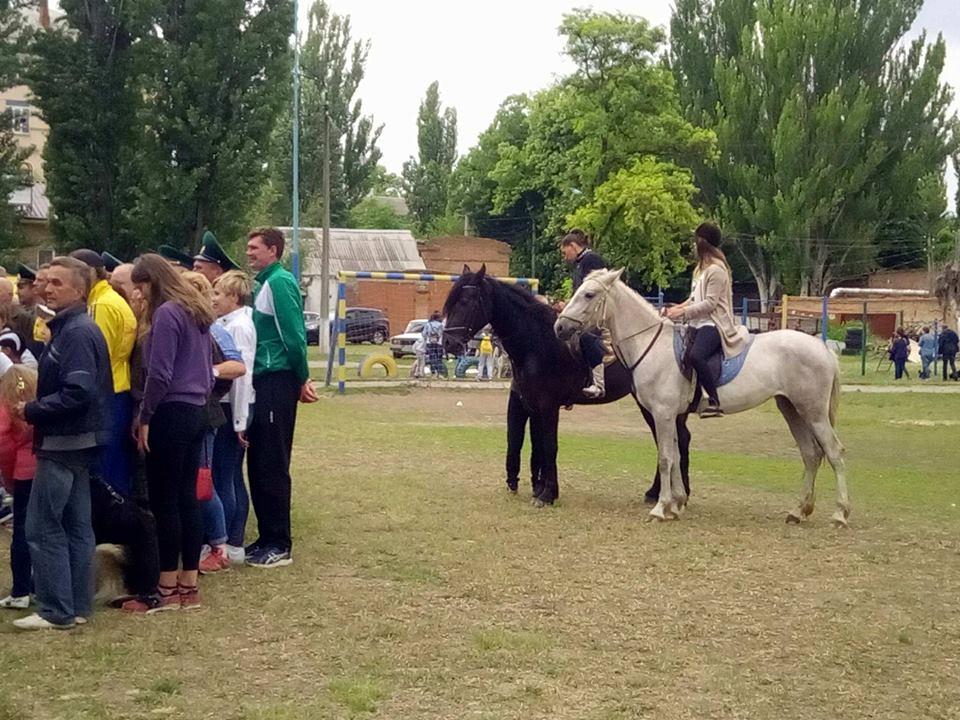 Лошади из питомника