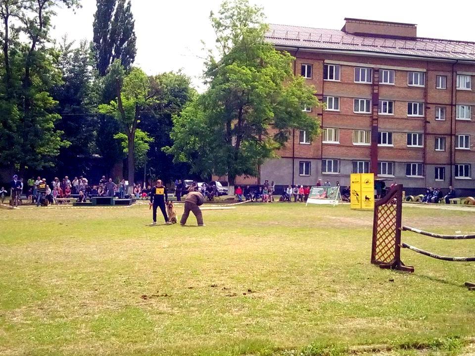 В Никополе показали конно-спортивное шоу и выступления служебных собак