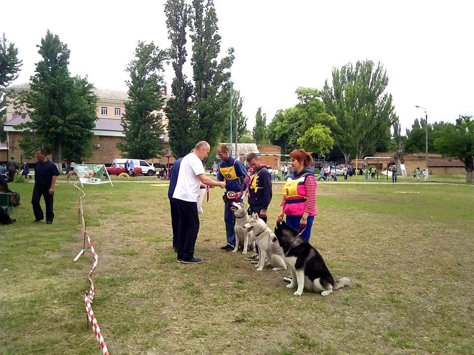 В ежегодном соревновании приняли участие 4 сибирские хаски и 7 служебных немецких овчарок