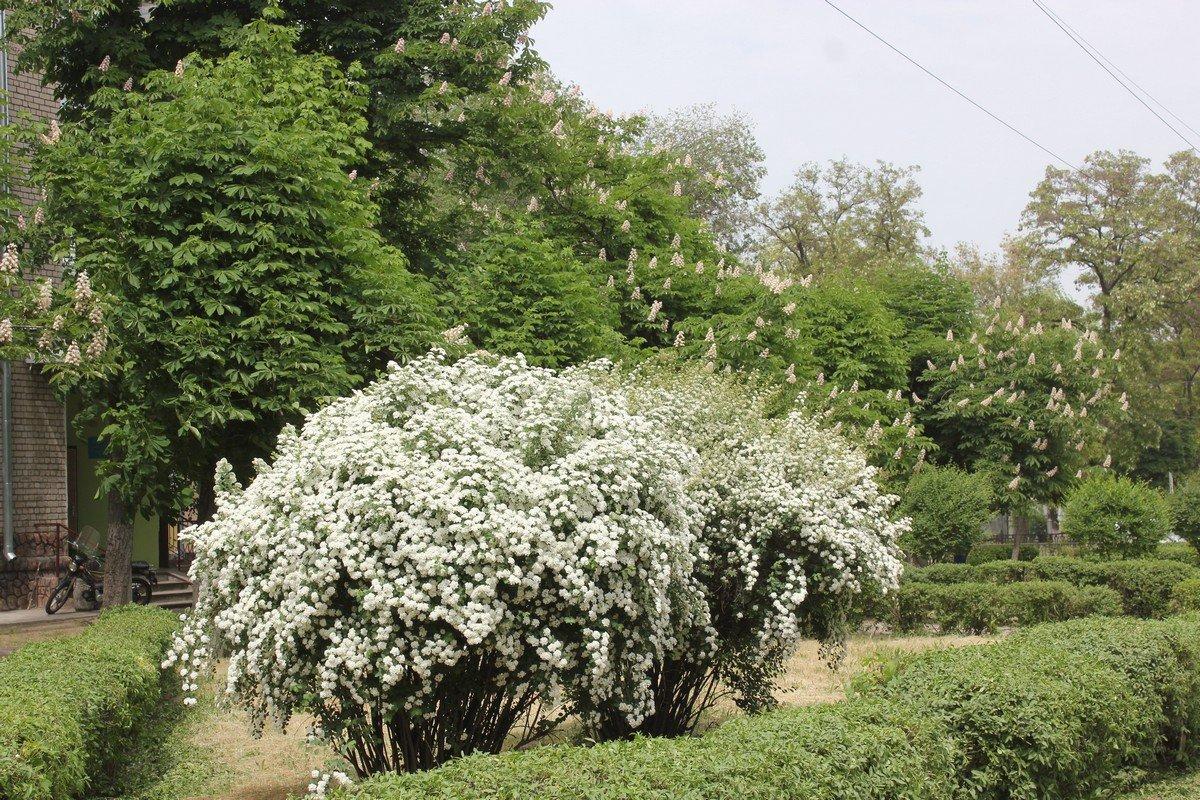 """Белое облако """"невесты"""" на Станиславского"""