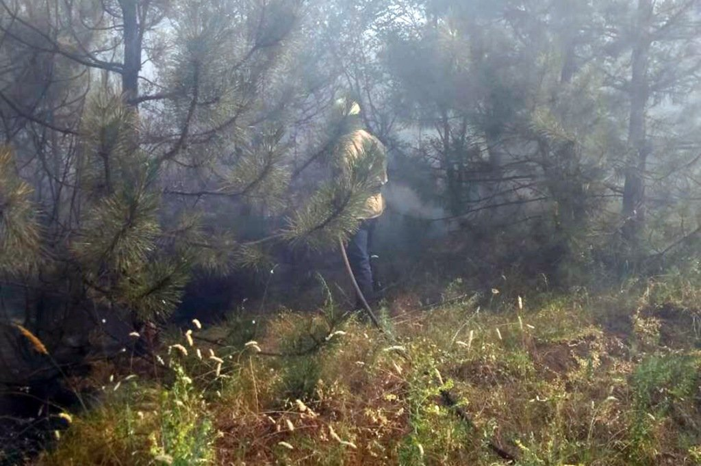 Общая площадь пожара составила 2,7 гектара