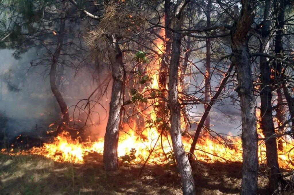 В Марганце загорелся хвойный лес