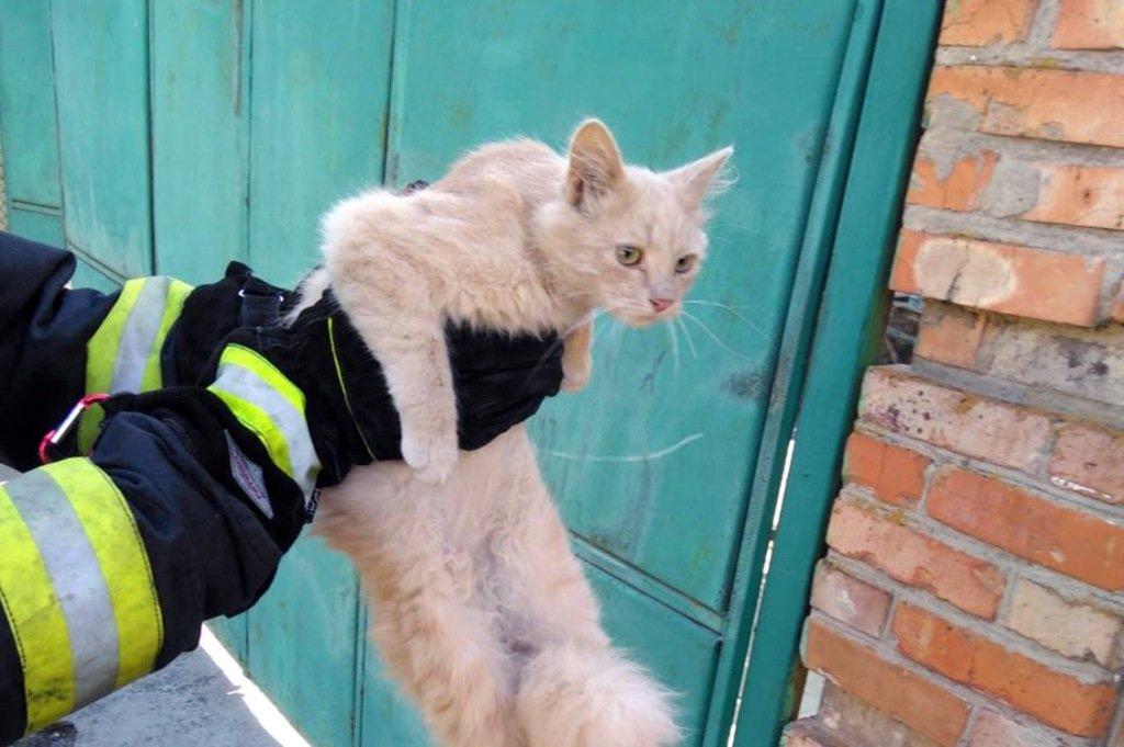 В Никополе кот укусил спасателя