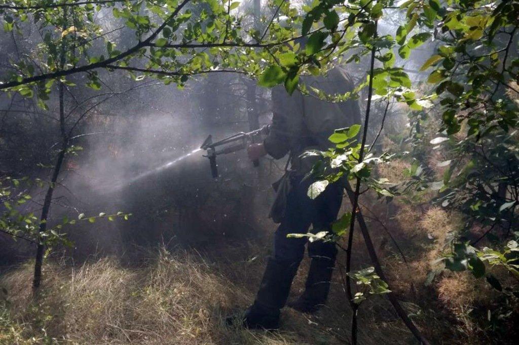 Огонь уничтожил 2,7 гектара хвойного лесаи сосны