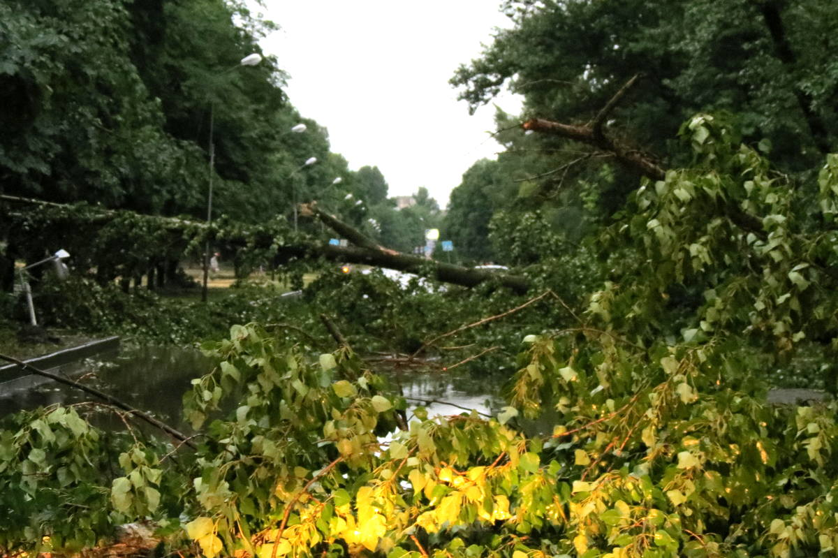 На улице Шевченко дерево преградило путь водителям
