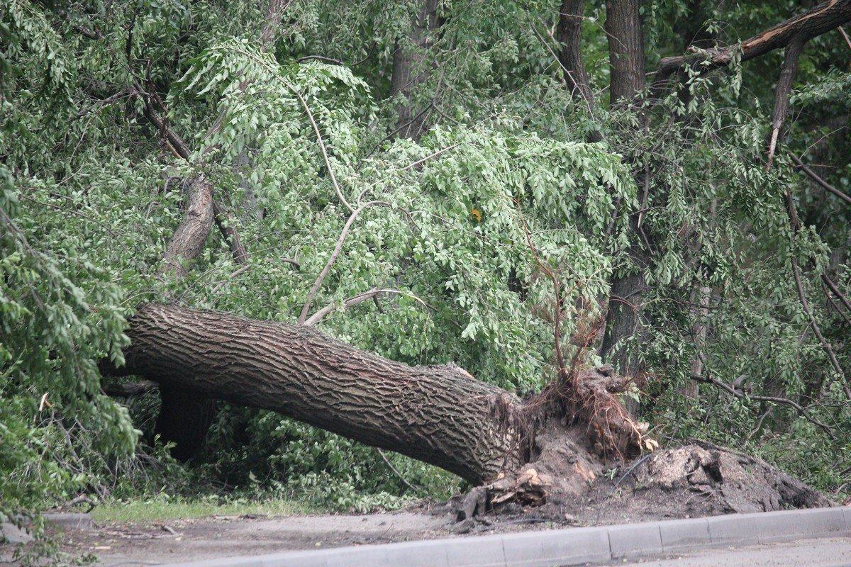 Дерево вырвало с корнем